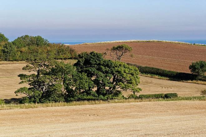 Как купить землю у государства — пошаговый алгоритм и необходимые документы