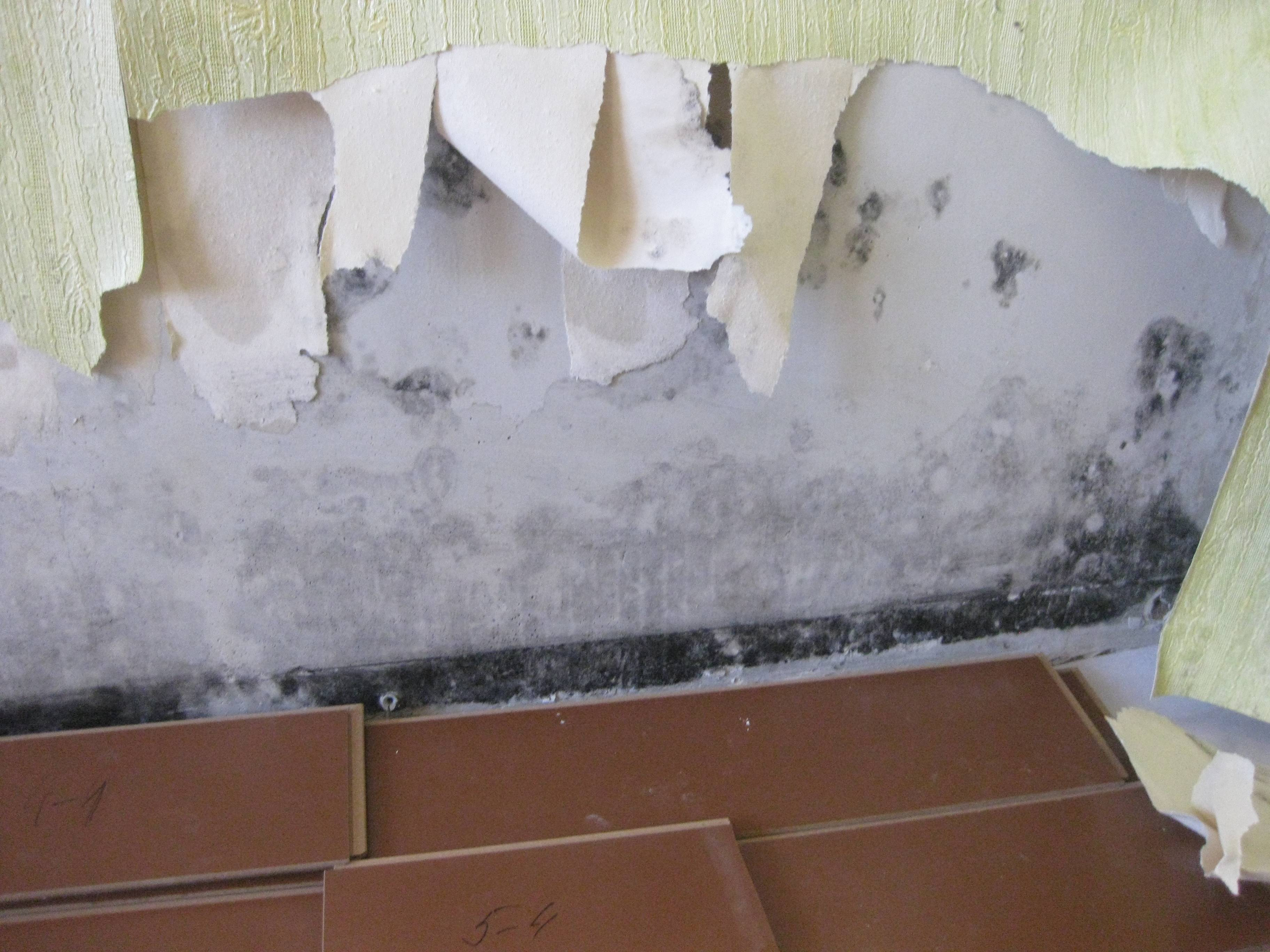 Как выбрать пенопласт для утепления стен внутри дома и как правильно его монтировать