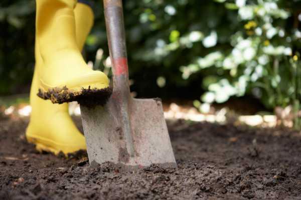Чудо-лопата для огорода - копаем землю на даче без усилий: принцип и правила работы ручного культиватора на основе совмещенных вил