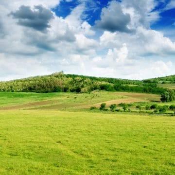 Составляем правильно договор аренды земельного участка сельскохозяйственного назначения по образцу