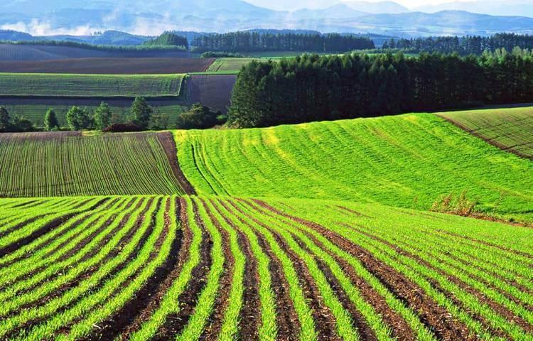 Что можно строить на землях лпх: нормы строительства и объекты, которые можно возводить на участке с учетом его категории земли