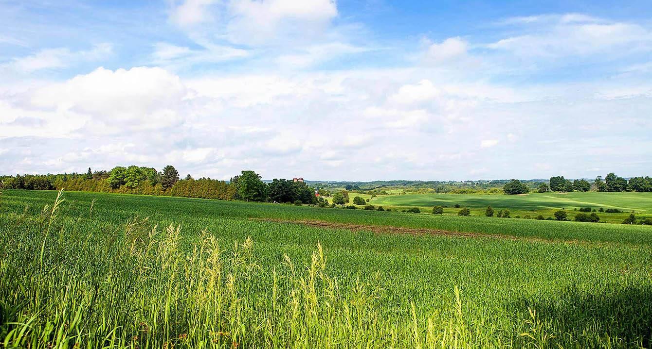 Изменения вида разрешенного использования земельного участка 2021