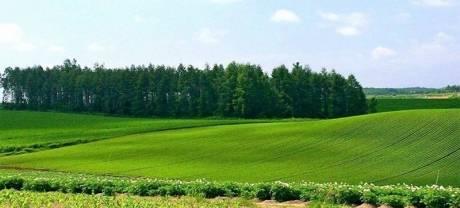Земли для садоводства: особенности категории земельных участков
