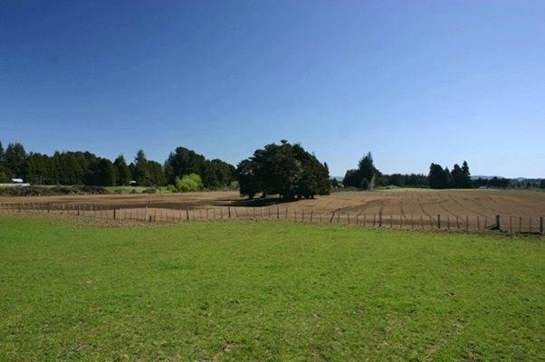 Межевание земельных участков сельскохозяйственного назначения: что это такое, цели и порядок процедуры, составление проекта