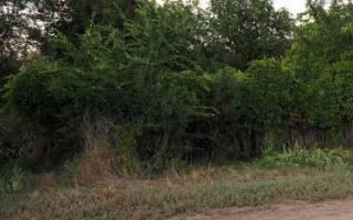 Купля-продажа доли земельного надела и особенности составления договора