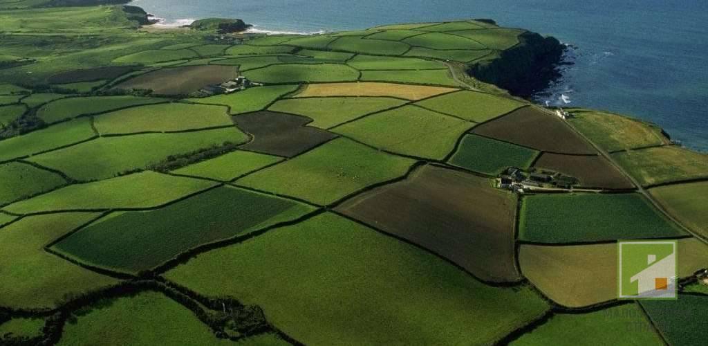 Категория земли сельскохозяйственного назначения: состав и особенности использования