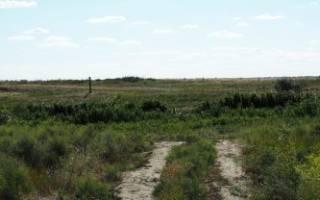 Приватизация: как оформить землю в собственность, если она в аренде?