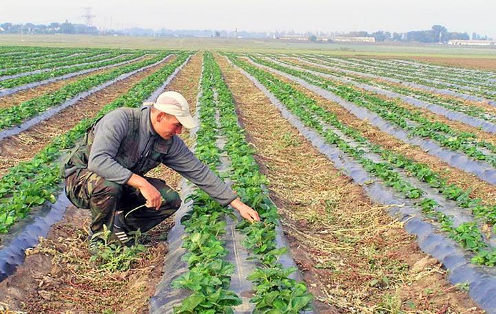 Приусадебный участок личного подсобного хозяйства: что это такое, виды разрешенного использования земель лпх в населенных пунктах