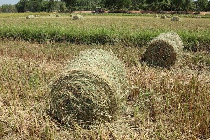 Как перевести землю сельхозназначения в ижс: стоимоть перевода
