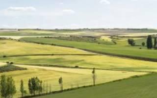 Можно ли арендовать земельный участок без аукциона и как это сделать правильно