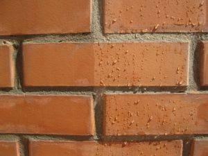 Правильная гидрофобизация штукатурки фасада и других кирпичных поверхностей — что это и технология процесса