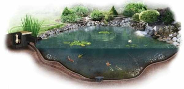 Разведение рыбы (март 2021) — vipidei.com