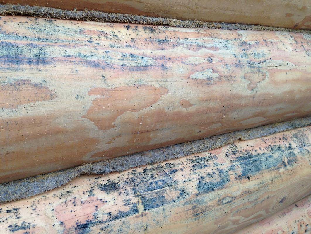 Фасадная краска по дереву для наружных работ: как выбрать покрытие для деревянного фасада дома и какая краска лучше + технология покраски