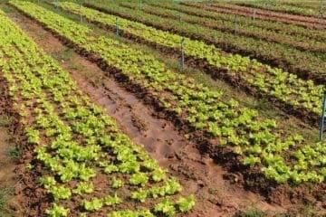 Всё о том как получить земли сельхозназначения бесплатно и о порядке предоставления земель сельскохозяйственного назначения