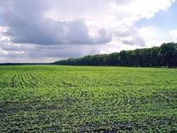 Земли сельскохозяйственного назначения: правовой режим и особенности их использования