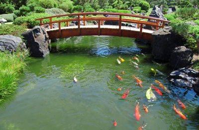 Как сделать пруд на участке, чтобы разводить в нем рыбу?
