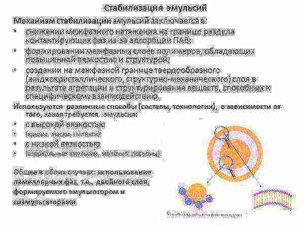 Латексные краски: особенности, разновидности и технология применения