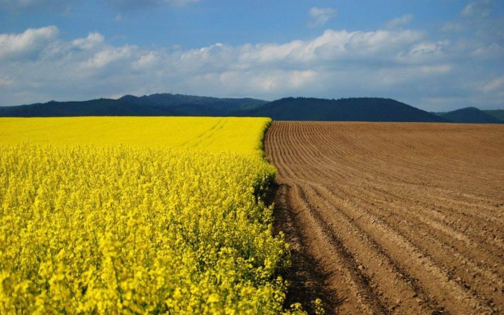 Правила перевода земель сельхозназначения, ижс и лесного фонда в промышленные