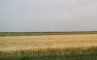 Выписки из законодательной базы о том как сдать в аренду землю сельхозназначения и другие виды земельных участков